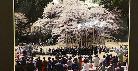 郷土の四季百景…淡墨桜
