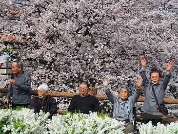 春爛漫~桜満開~大東デイサービスセンター