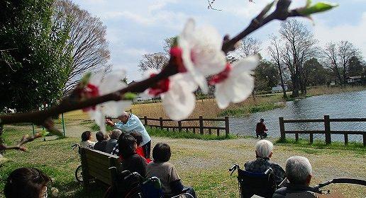 桜だより…曽根城公園に行ってきました♪
