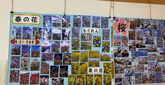 春の花 デイサービスセンター