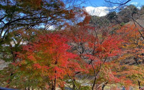 紅葉と滝の風景