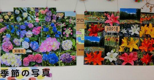 季節の花-写真展示